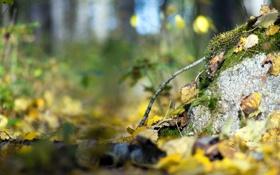 Обои природа, осень, макро