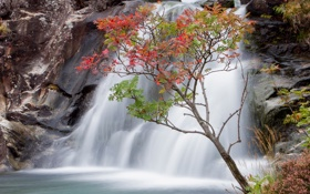 Картинка осень, листья, дерево, скалы, водопад