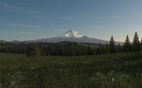 Обои поле, трава, снег, дерево, гора, арт, вершина