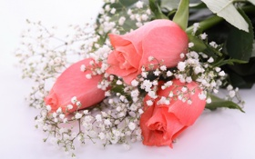 Картинка розы, букет, розовые, гипсофила