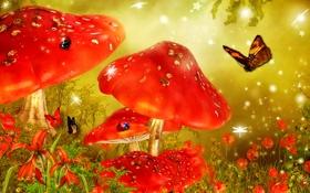 Обои цветы, бабочка, гриб, сказка