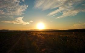 Обои небо, солнце, фотографии, пейзажи, поле, закаты солнца, поля
