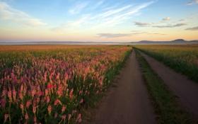 Картинка дорога, поле, пейзаж, цветы, утро