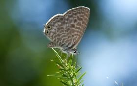 Картинка бабочка, растение, ветка