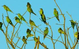 Обои ветки, небо, стая, перья, птицы, дерево