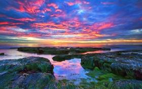 Картинка море, небо, облака, водоросли, закат, камни, скалы