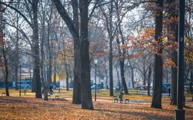 Обои осень, деревья, парк, люди, дерево, улица, Пейзаж