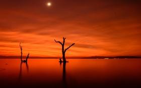 Картинка деревья, ночь, огни, озеро, Луна