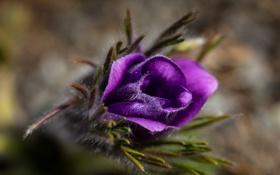 Картинка цветок, макро, природа, фон
