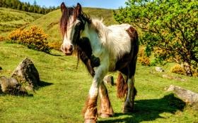 Обои природа, лошадь, конь