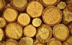 Картинка круги, дерево, дрова, брёвна, пеньки