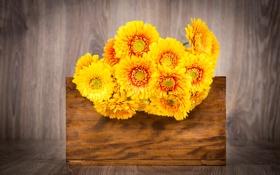 Обои фото, Цветы, Желтый, Хризантемы