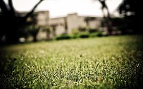 Обои зелень, трава, макро, газон, фокус, grass, площадка