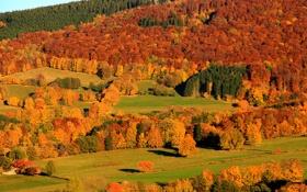 Обои осень, лес, деревья, горы, склон