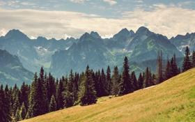 Обои облака, пейзаж, горы, природа, фото, сосны