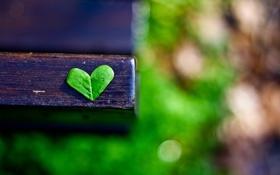 Обои макро, лист, сердце