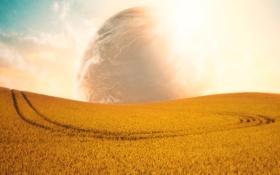 Обои поле, небо, солнце, облака, свет, пейзаж, природа