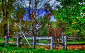 Обои дом, забор, конь