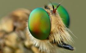 Обои глаза, муха, голова, насекомое