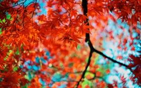 Обои осень, листья, цвета, ветки, красные