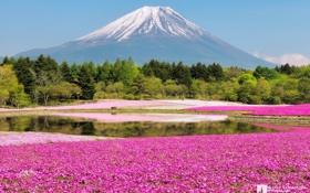 Обои лес, цветы, гора, Япония, Фудзи, photographer, Kenji Yamamura