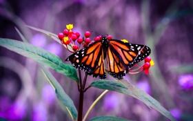 Обои листья, бабочка, цветы