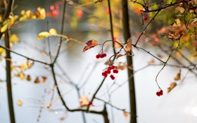 Обои abstract, autumn, berries