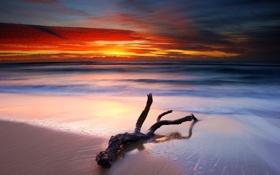 Картинка море, пляж, закат, ветка