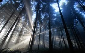 Обои лес, лучи, свет, природа