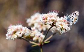 Обои макро, бабочка, растение, размытость, цветы. белые