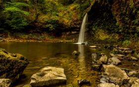 Обои мох, кусты, деревья, водопад, лес, камни