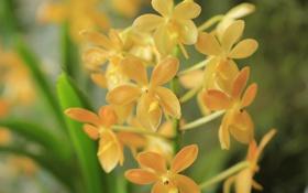 Обои цветы, природа, растение, лепестки, соцветие