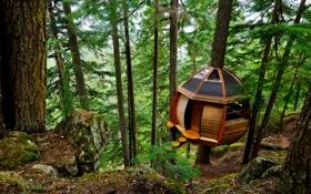 Картинка лес, деревья, домик