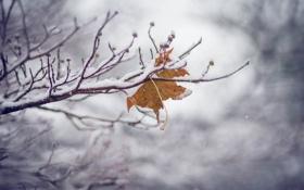 Обои холод, зима, макро, снег, лист, цвет, лёд