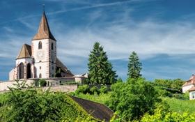Обои деревья, Франция, церковь, France, Hunawihr, Юнавир, Церковь Сен-Жак-ле-Мажёр