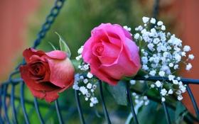 Обои бутоны, розы, гипсофила