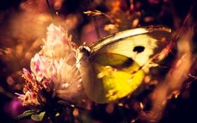 Обои цветок, бабочка, растения, макро. природа