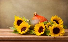 Картинка цветы, подсолнух, тыква