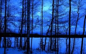 Картинка зима, небо, облака, снег, деревья, ночь
