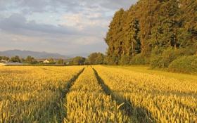Обои поле, лес, пейзаж, природа, село