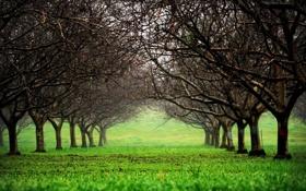 Картинка зелень, трава, деревья, природа, парк, фото, дерево