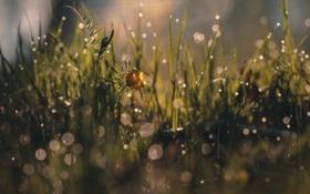 Картинка цветок, трава, макро, роса, блики, весна, утро