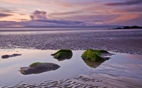 Картинка песок, море, вода, водоросли, закат, отражение, камни