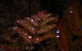 Обои природа, лист, роса