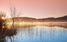 Обои озеро, утро, камыш