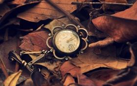 Картинка листья, стрелки, часы, цифры