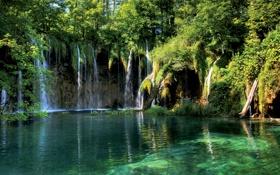 Картинка лес, прозрачность, деревья, река, листва, водопад, дно