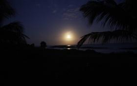 Картинка небо, пейзаж, пальма, остров, силуэты, нось