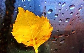 Картинка капли, макро, желтый, природа, лист, капельки