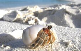 Обои песок, макро, краб, раковина, прячется